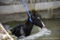 Pferd im Isarkanal-025