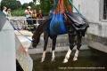 Pferd im Isarkanal-075